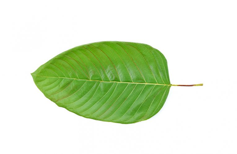 Basic Actions To Ideal Kratom Of Your Desires